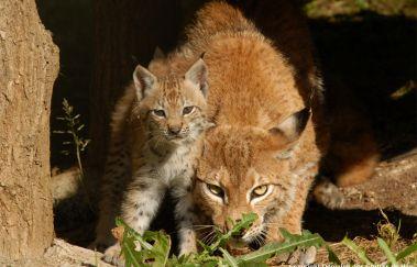 Het Wilde Dierenpark - Het Domein van de Grotten van Han-Parcs-animaliers tot Provincie Namen