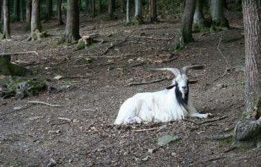 Wildpark van La Roche-Parcs-animaliers tot La Roche en Ardenne - Province du Luxembourg