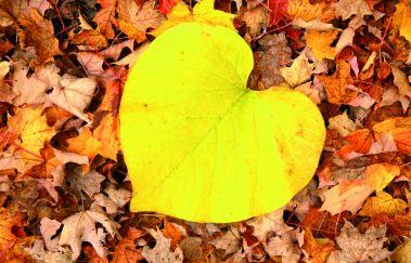 <p>Herfstgevoel: 6 Tips om van de herfst het leukste seizoen te maken</p>-Détente tot