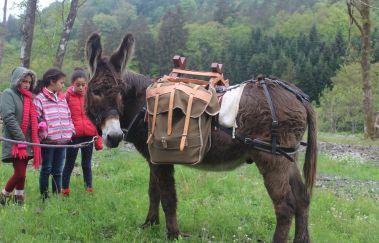 Baudet d'âne-Equitation tot Provincie Luxemburg