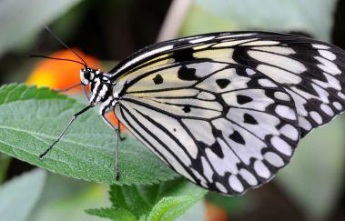 Vlinderschuur-Parcs et jardins tot Province de Hainaut
