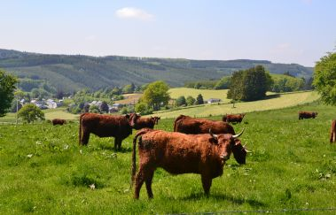 Ennal-Ville tot Provincie Luxemburg