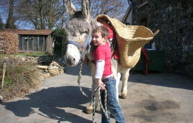 Ânes-OK-Promenades âne-cheval-attelage tot Provincie Luik